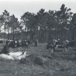 Men working in the fields with livestock, probably in the late 1940s or early 1950s