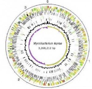 Then the genome of M. Leprae was mapped.
