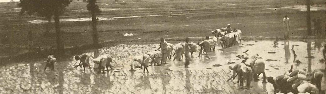 People working in the fields at Purulia Leprosy Home, West Bengal, India.