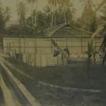 Pulau Jerejak, women's camp, 1931.